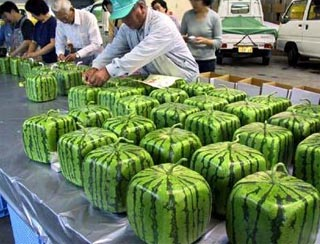 square watermelons.jpg